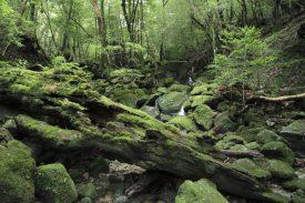 苔の森への写真