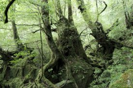コケの森を選ぶの写真