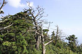 神山展望所の写真