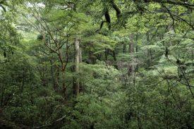 綺麗な森の写真