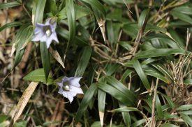 数々の高山植物の写真