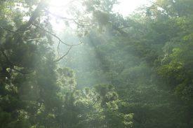 白谷雲水峡登山口 到着!の写真