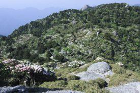 平石岩屋の写真