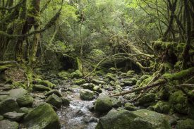 水の音が聞こえる森の写真