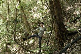 亜熱帯の森の写真