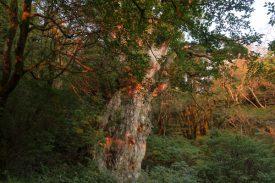 <2日目>縄文杉の写真