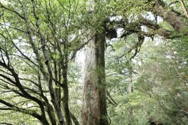 静かな森の写真