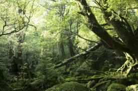 苔むす森の写真