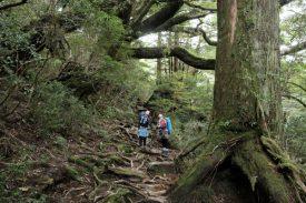 巨木の森の写真