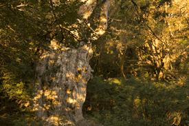 縄文杉に会いにの写真