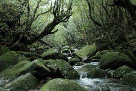 ①白谷雲水峡の写真