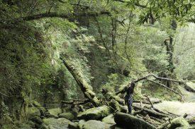 奉行杉コースの写真