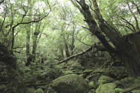 苔むす森への写真