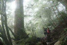清々しい森の写真