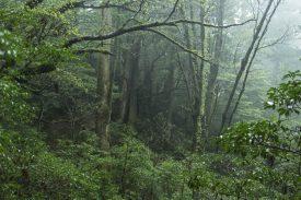天文の森の写真