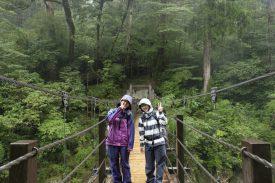 雨の森の写真