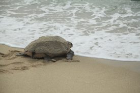 海亀観察の写真